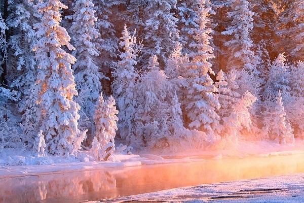 заснеженный лес, река в лучах солнца