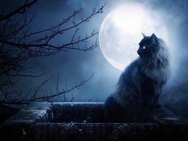 черный кот на фоне Луны
