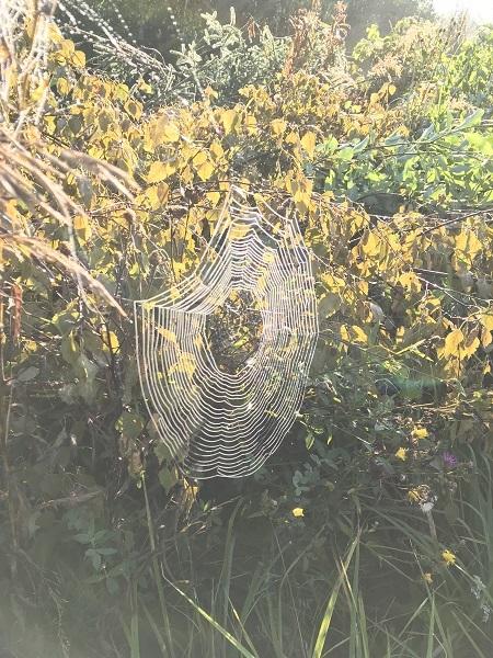 фото паутины на солнце