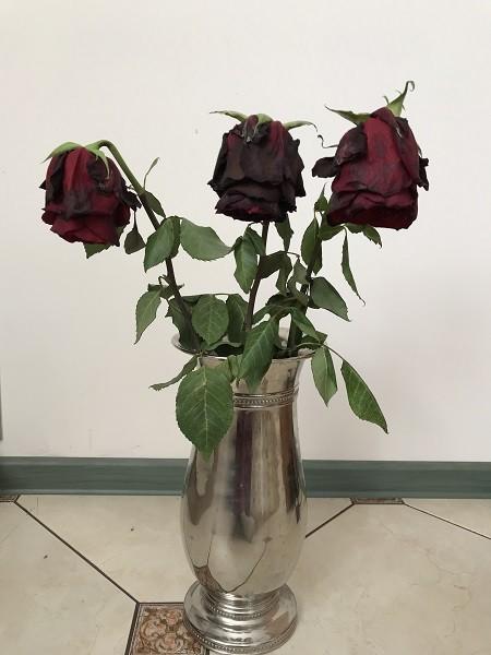 увядшие розы в вазе
