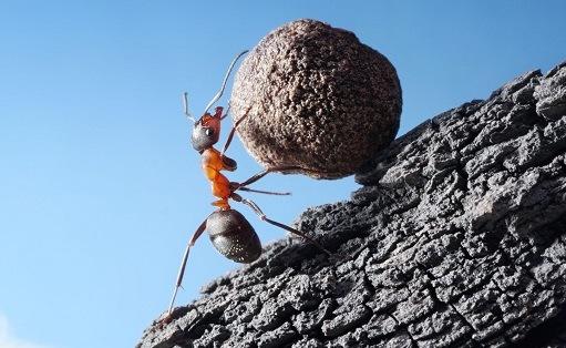 муравей катит огромный шар
