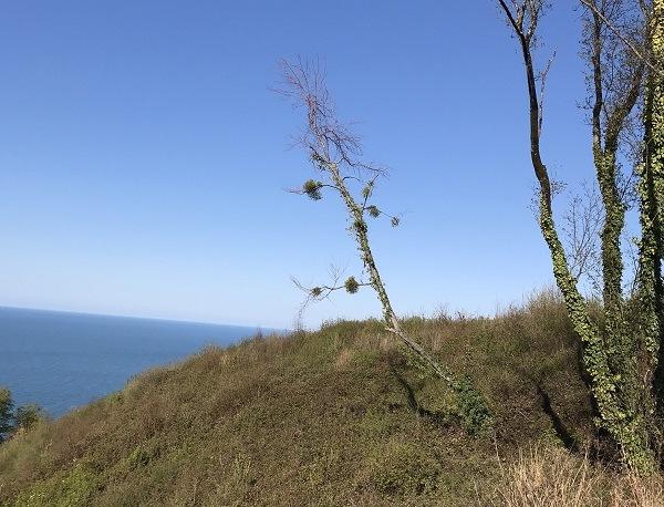 дерево на вершине у моря
